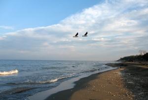 Caspian shore 1