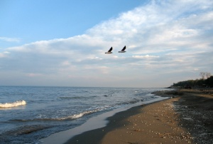 Caspian shore 1