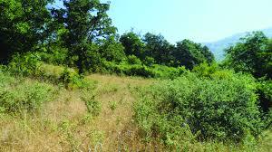 grassland trees 2