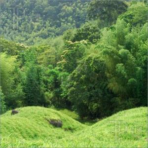 grassland trees 3