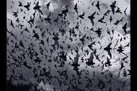 hween bats 1