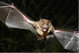 hween bats 3