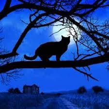 hween cat 2