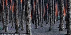 hween forest 4