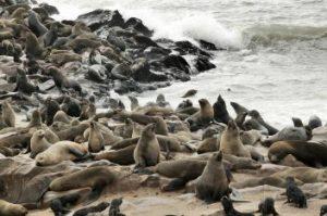Seals on rocky shore