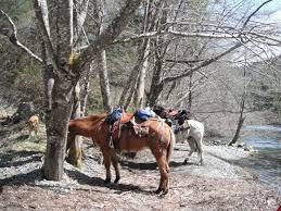 Avalon travelers horses 2