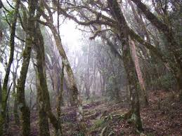 grassland trees
