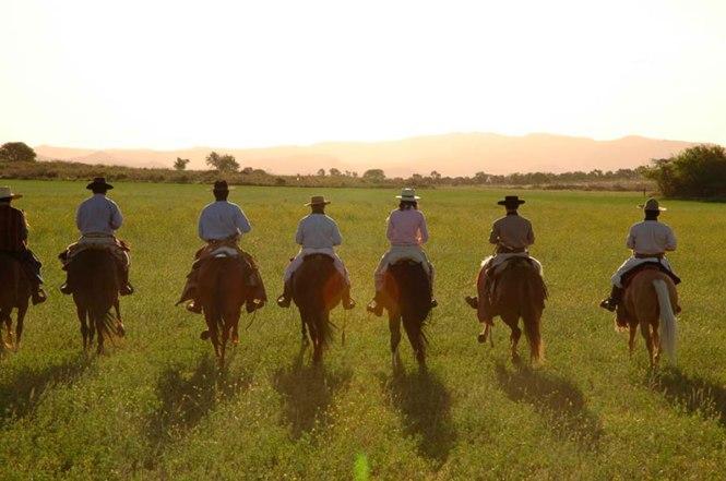 kavalon travelers horse 1