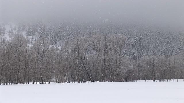 ice snowy woods 1