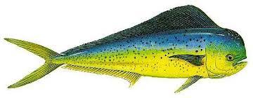 po fish 1