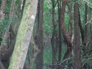 po mangrove 2