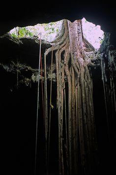 po mangrove 5