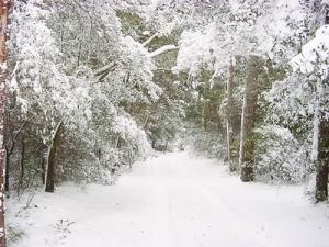 ice snowy soods 4