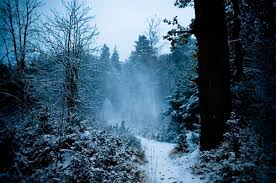 ice snowy woods 2