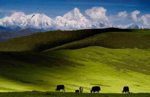 for-tibet-1