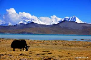 for-tibet-2