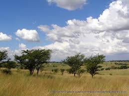 grassland trees 5