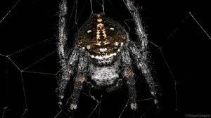 ab-spider-web-5