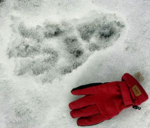 ab-footprints-in-snow