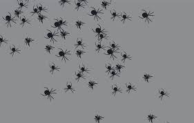 ab-spider-8